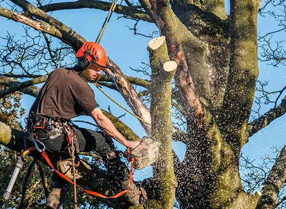 Abattage arbre Bastogne