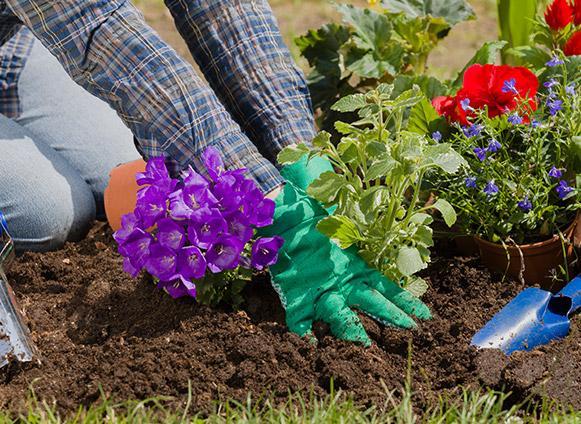 Plantation jardin arlon