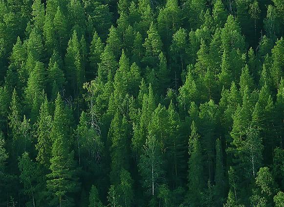 Travaux forestiers Bertrix