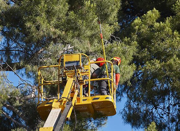 Broyage arbre bastogne